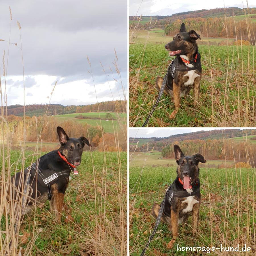 Hund Model