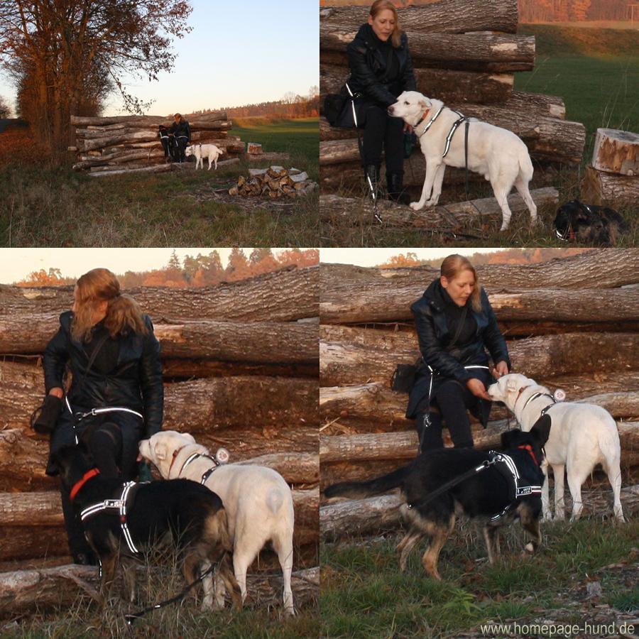 Hunde Blog Hund Spaziergang