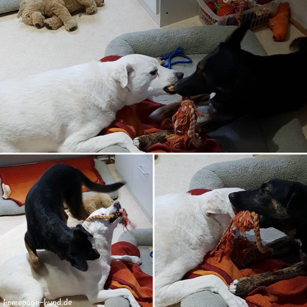 Hundespielzeug Hunde Hundeblog