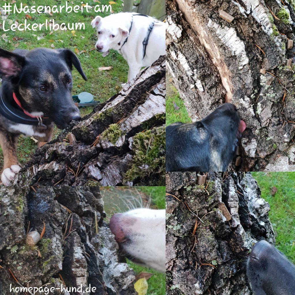 Leckerli Baum Nasenarbeit