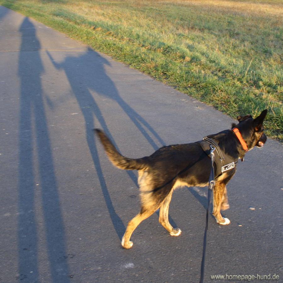 Schatten Hund Blog