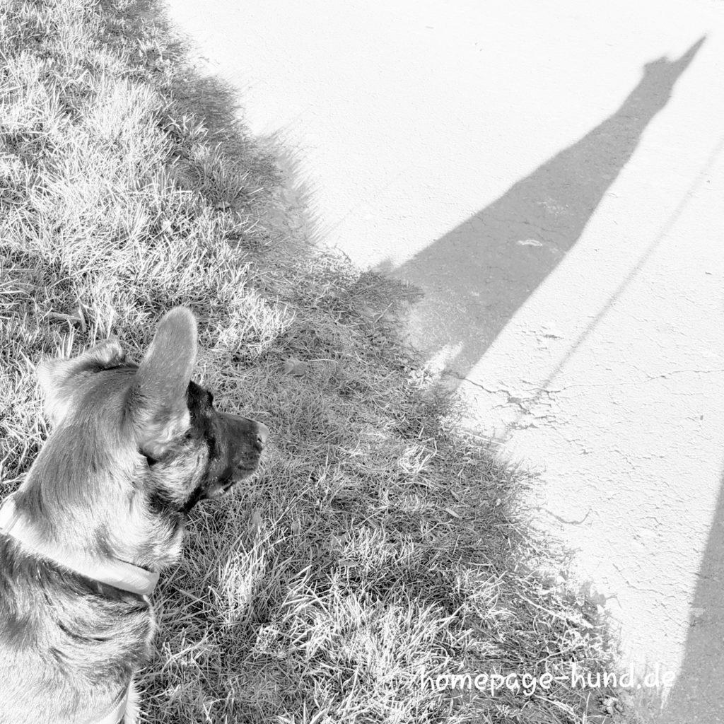 Schatten Hund