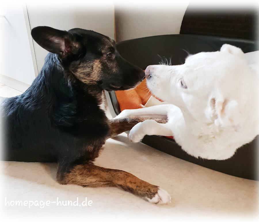 Tierschutzhunde Dorchen und Kalli