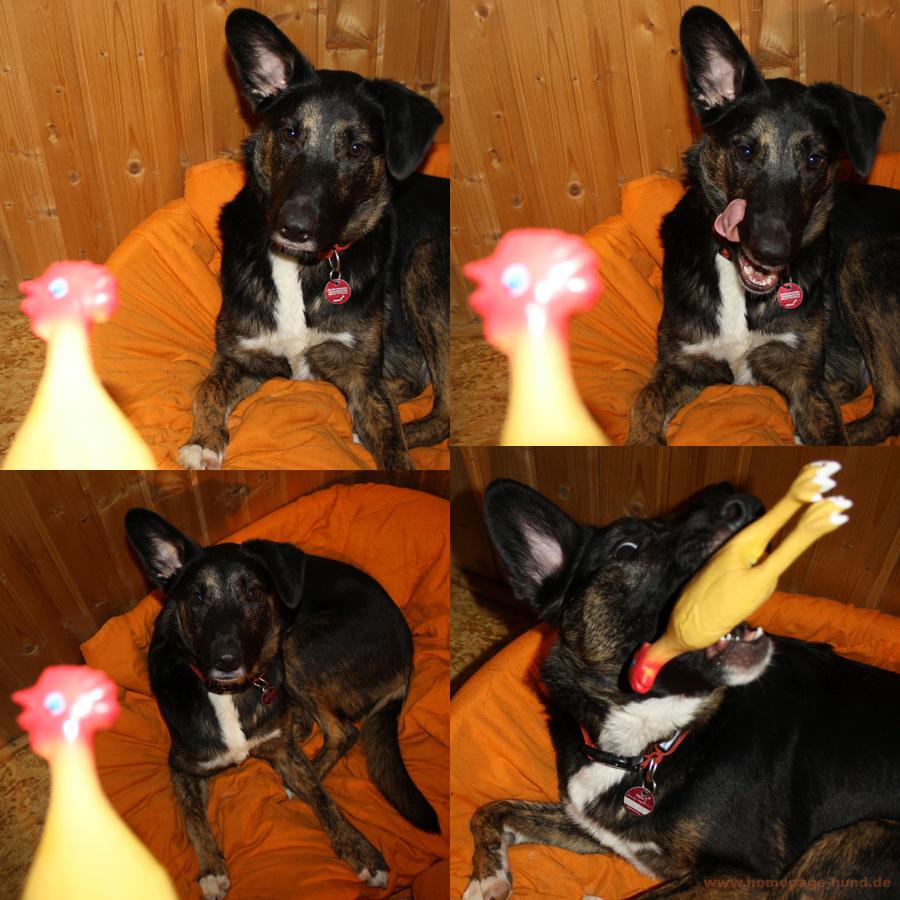 Gummihuhn Hundespielzeug