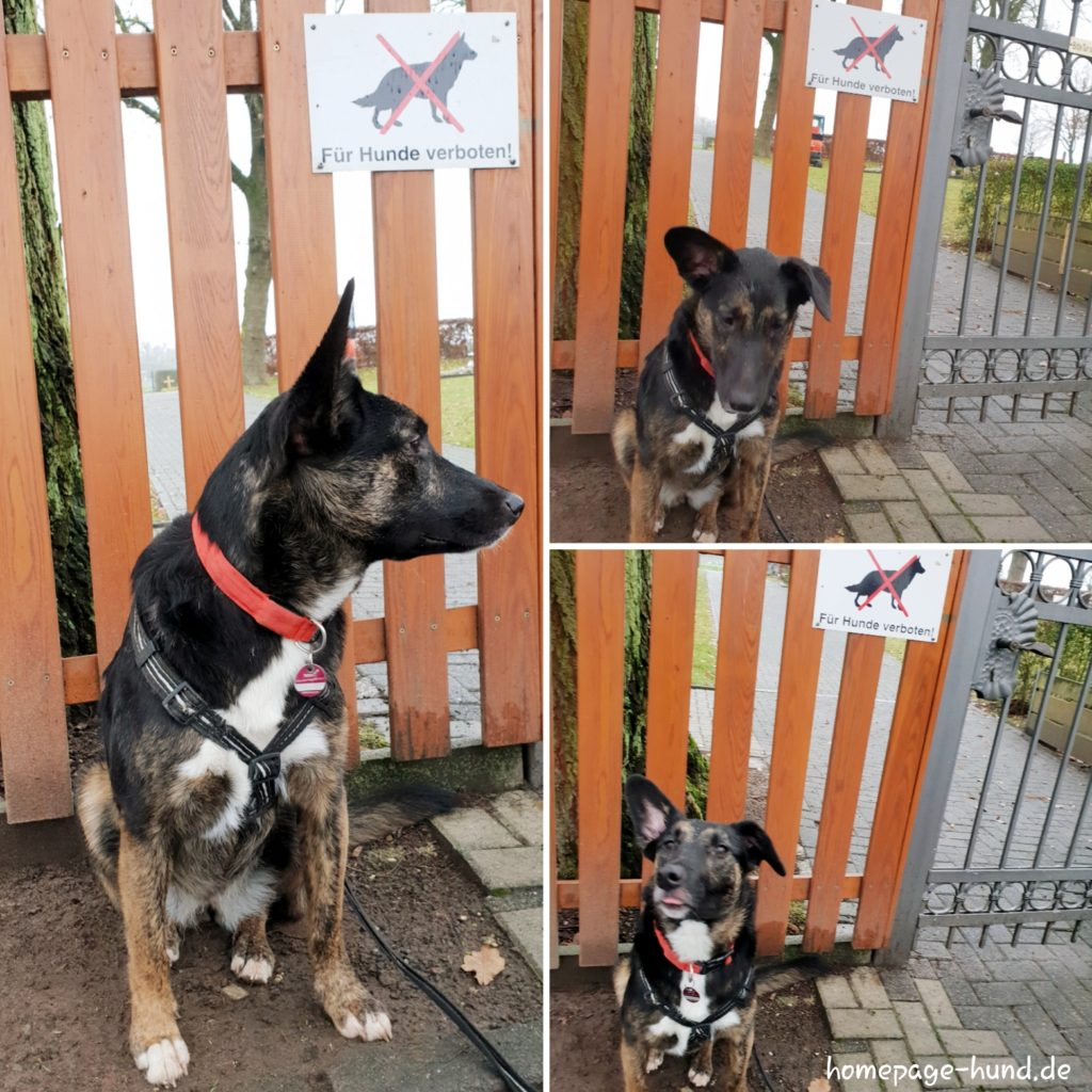 Hunde verboten Schild