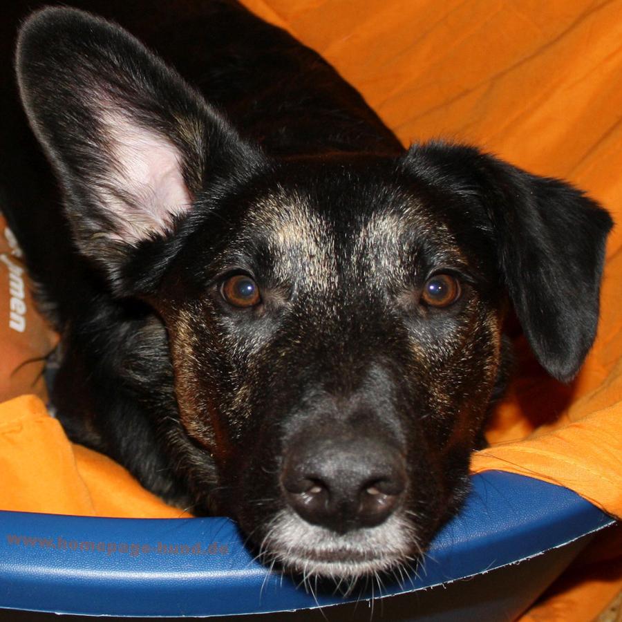 Dorchen Hundemodel