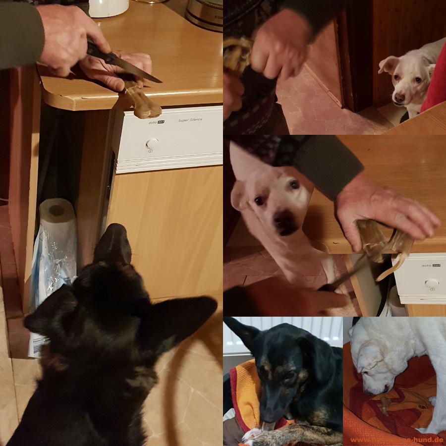 Der letzte Hundeknochen - ... muss gerecht geteilt werden! Dorchen und ich haben das natürlich genaustens kontrolliert!!!