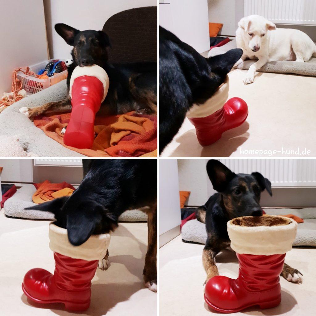 Dorchen hat den Leckerlimann nicht mehr bekommen, aber seinen Schuh mitgebracht. nikolaus