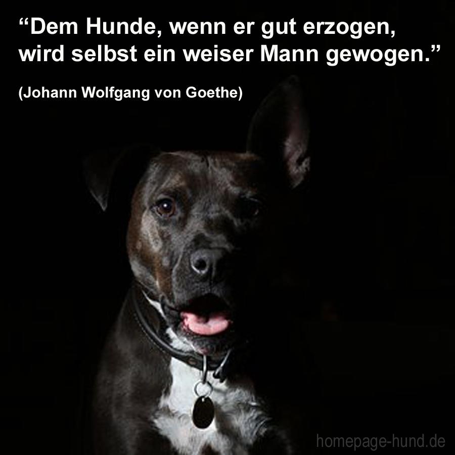 Hundesprüche mit Bild kostenlos