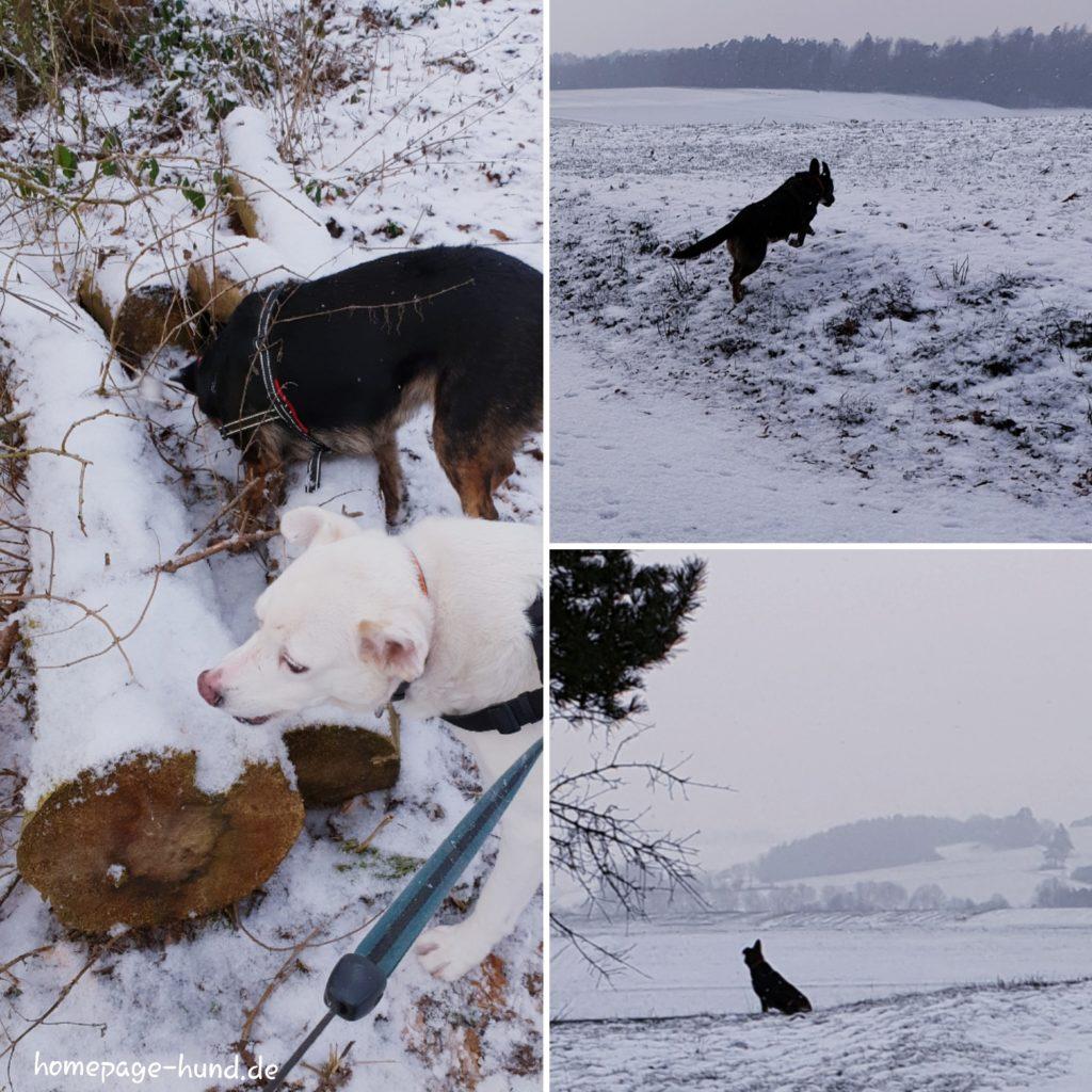 Spaziergang im Schnee in Wohratal Hessen