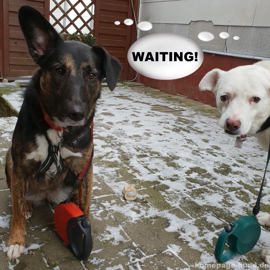 Warten auf Frauchen