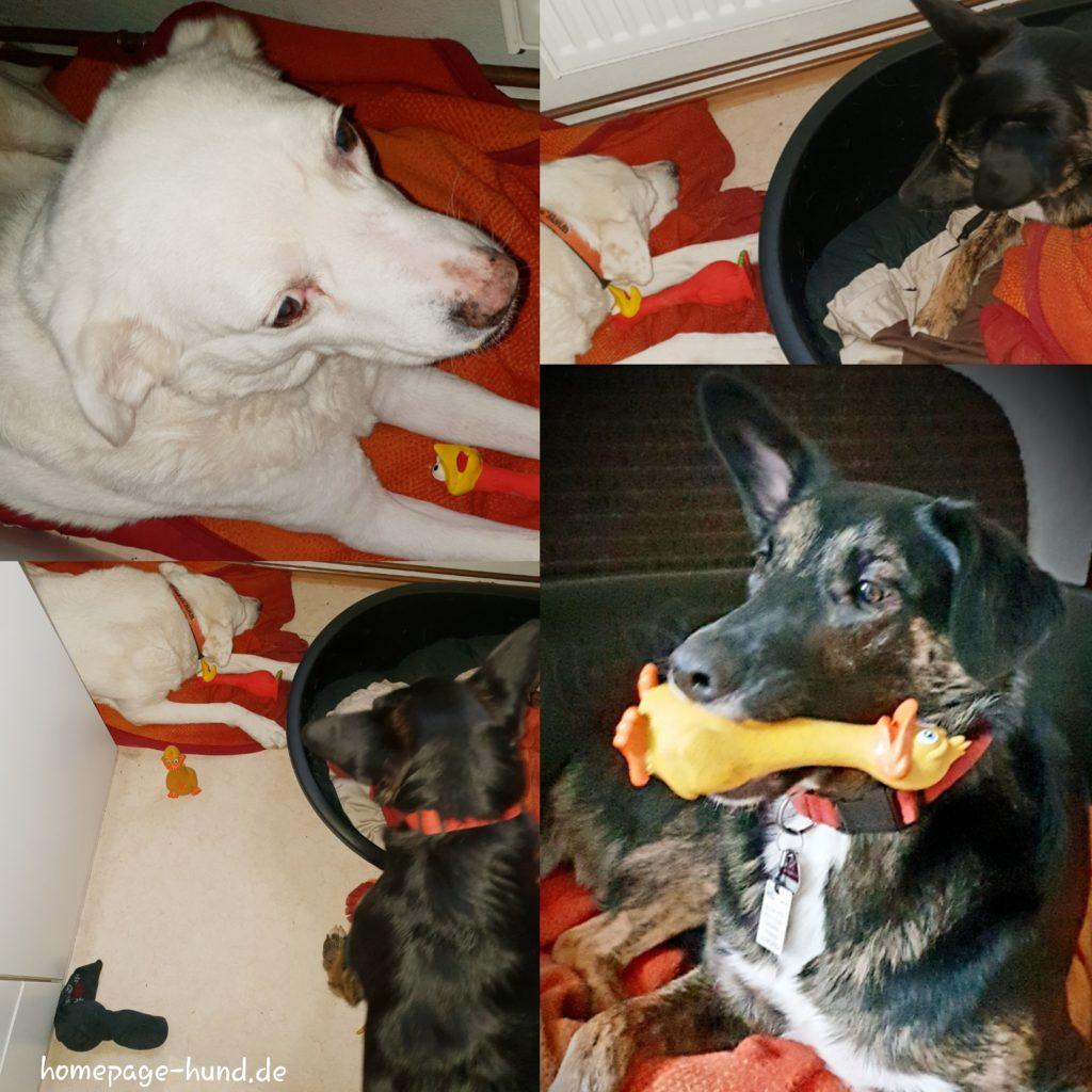 Quietschis Hundespielzeug
