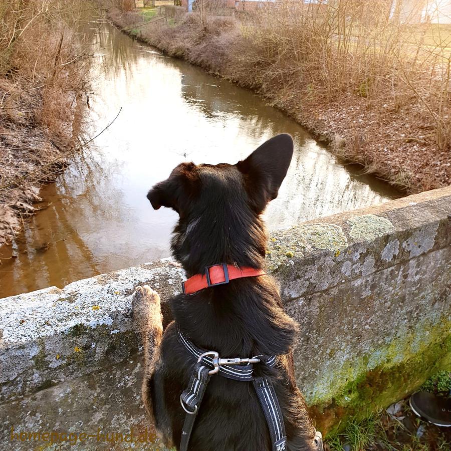 Wohratal - Hund an der Wohra