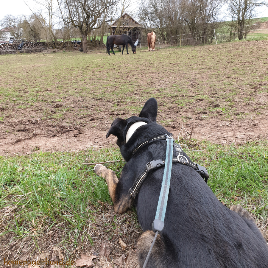 Dorchen bei den Pferden