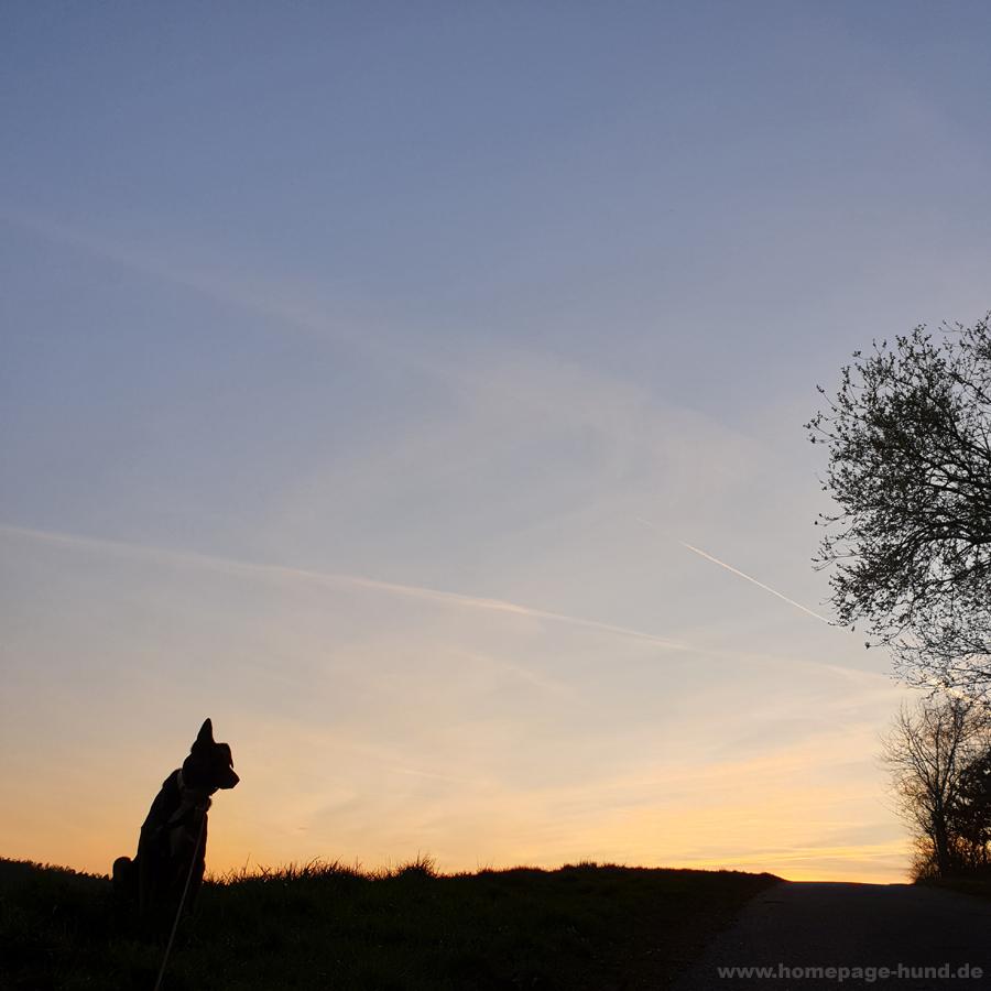 Dorchen im Sonnenuntergang