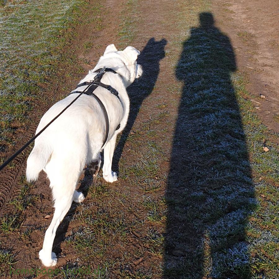 Schattenfoto - Foto mit Kalli