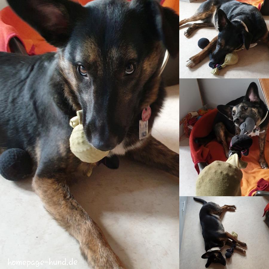 Der Sockenball - Hundespielzeug selbstgemacht. Einzelne Socken hat ja jeder und ist der Ball nicht mehr interessant, steckt man ihn in eine Socke oder mehrere und verknotet sie.