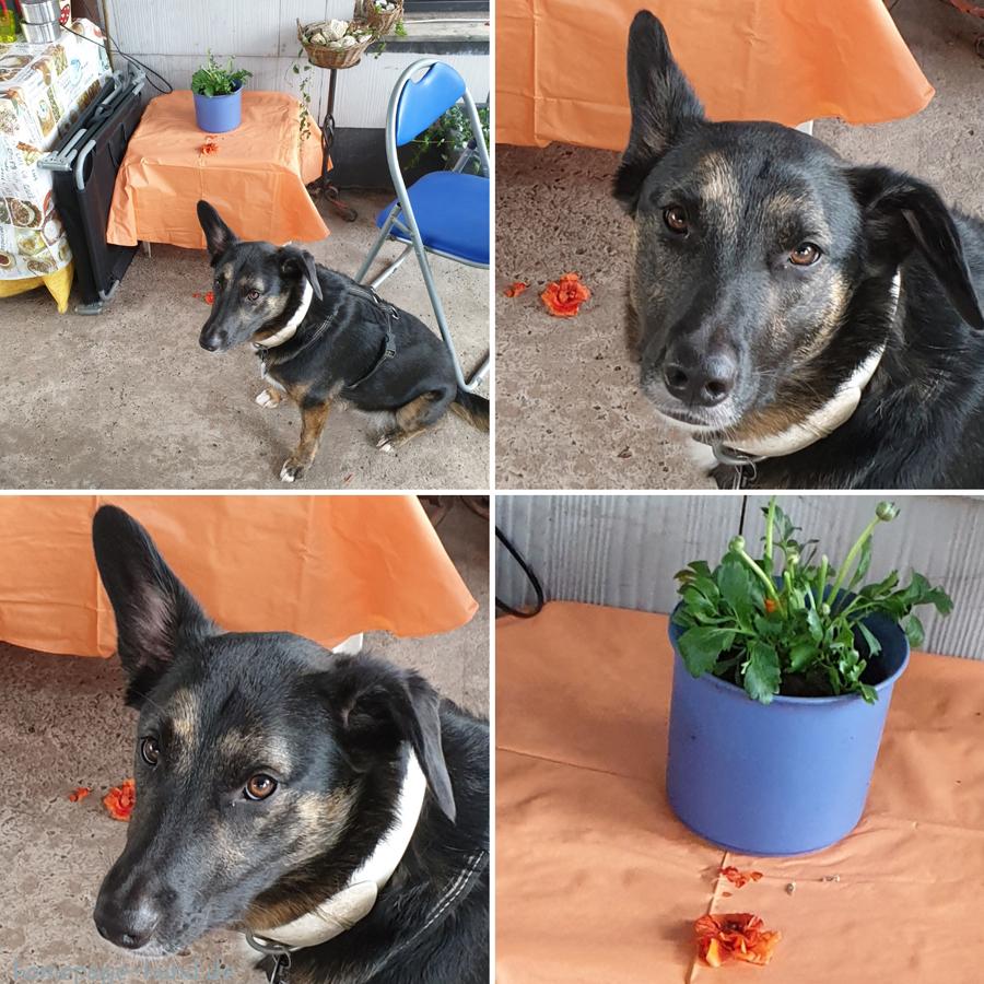 Dorchen und die abgebissenen Blumen