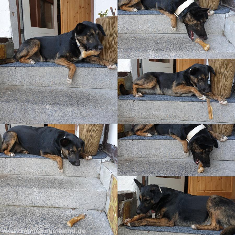 Schwerkraft des Hundeknochen