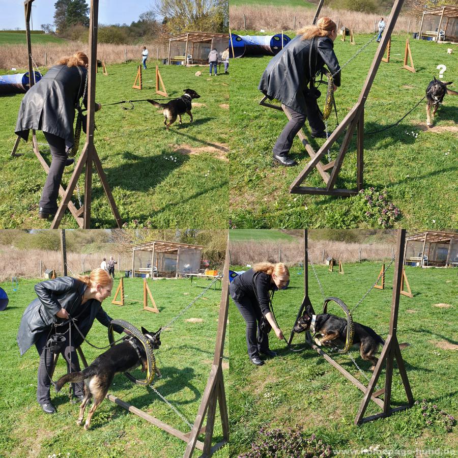 Hundeschule - Frauchen wollte wohl diesmal auch mitmachen, dabei passt sie doch gar nicht durch den Reifen. Die Dogtrainerin machte große Augen, als Frauchen alles abräumte. Ich hatte damit NICHTS zu tun!