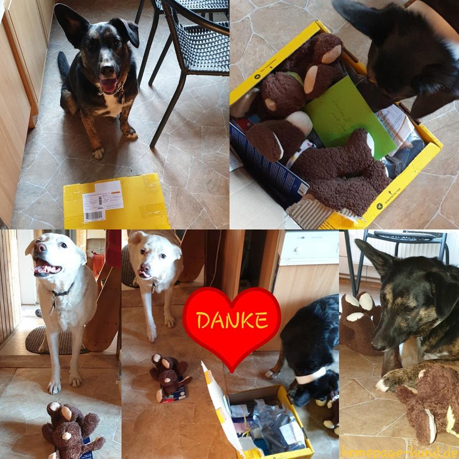 Der Osterhase war schon bei uns 😀👍 Vielen Dank an Dorchen's Retterin @dagmarannas, die Dorchen, damals 4 Monate alt und allein unterwegs, nicht alleine gelassen hat und mit der Hundehilfe Portugal und @tierheimmarburg ein Zuhause gesucht haben ❤