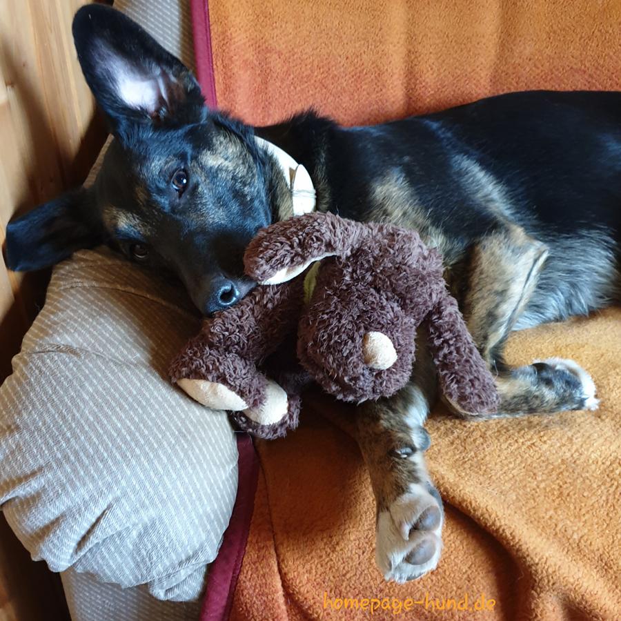 Dorchen chillt auf der Couch