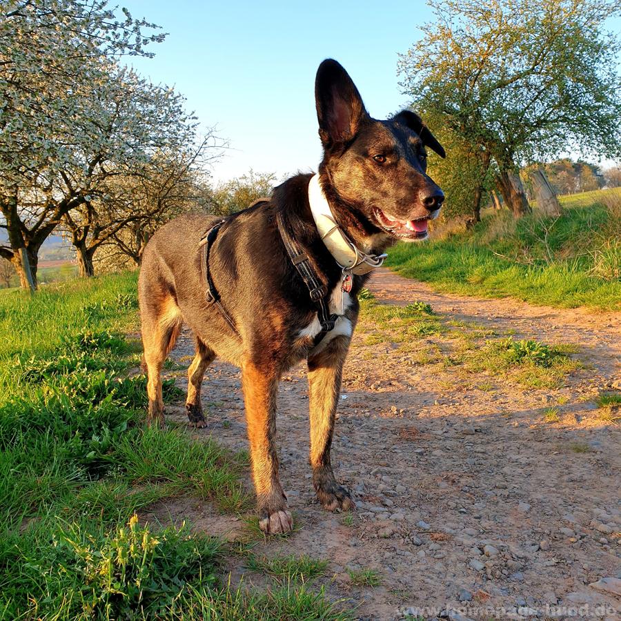 Gassi im Frühling im Wohratal Wohra in Hessen