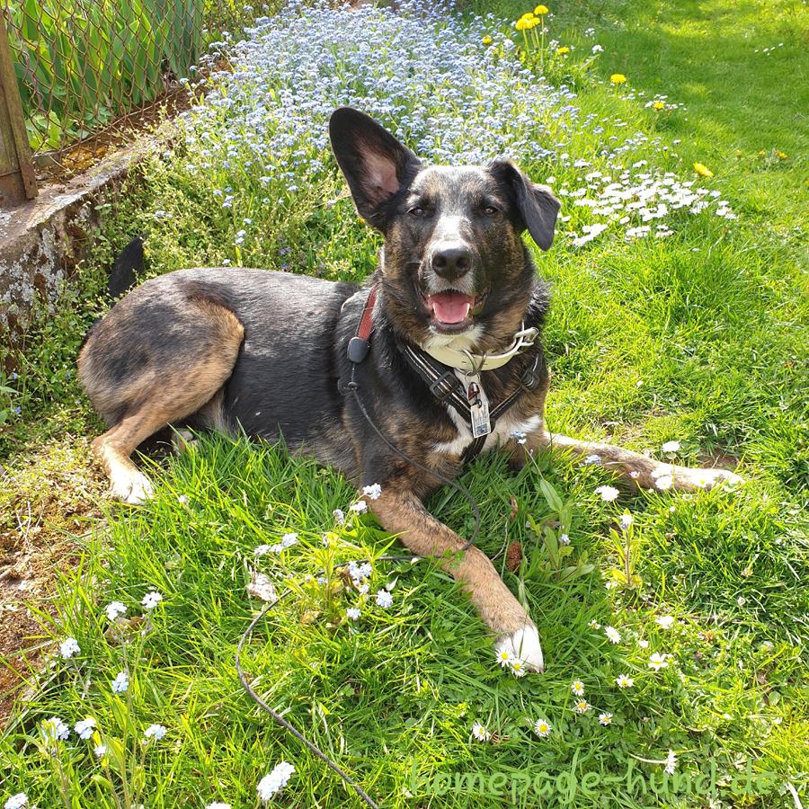 Dorchen 16 Monate - Hund aus dem Tierschutz Portugal
