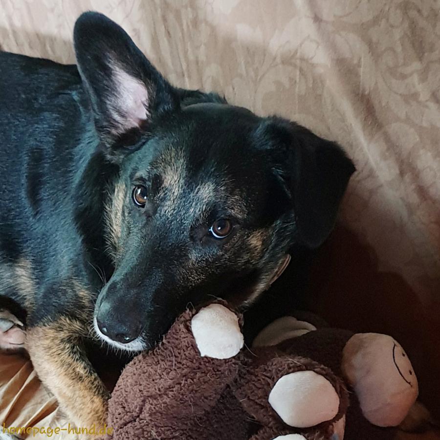 Hund Dorchen, mit Hundepuppe auf dem Sofa.
