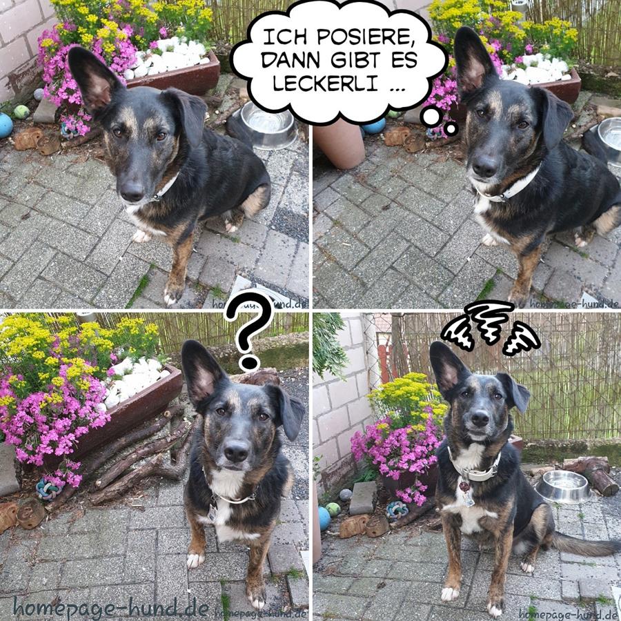 Hundemodel