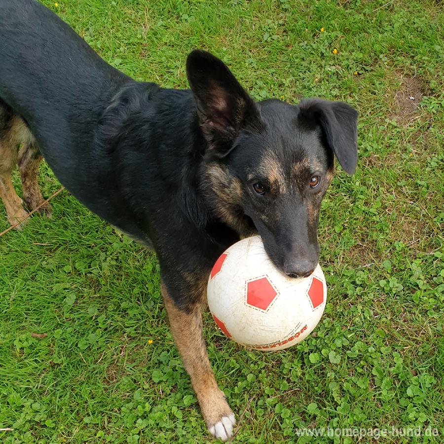 Fussball Hund