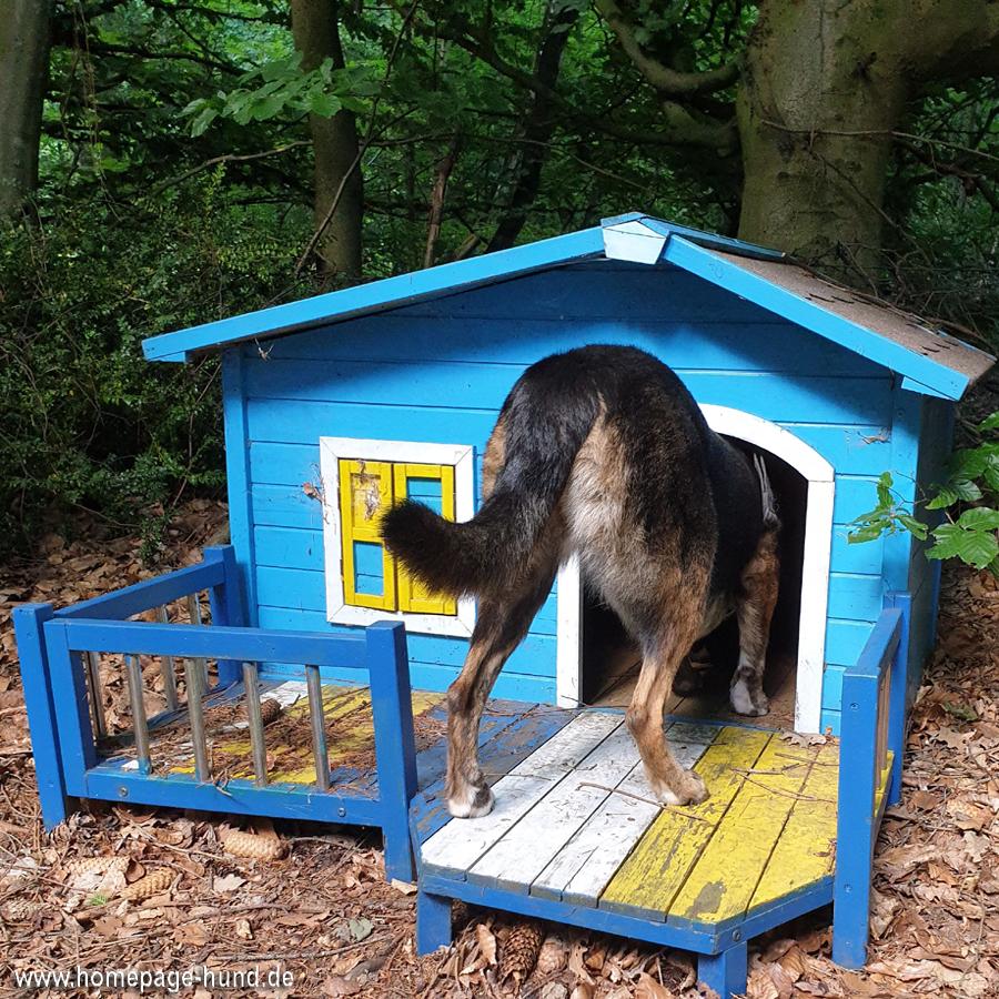 Dorchen checkt das Hundehaus