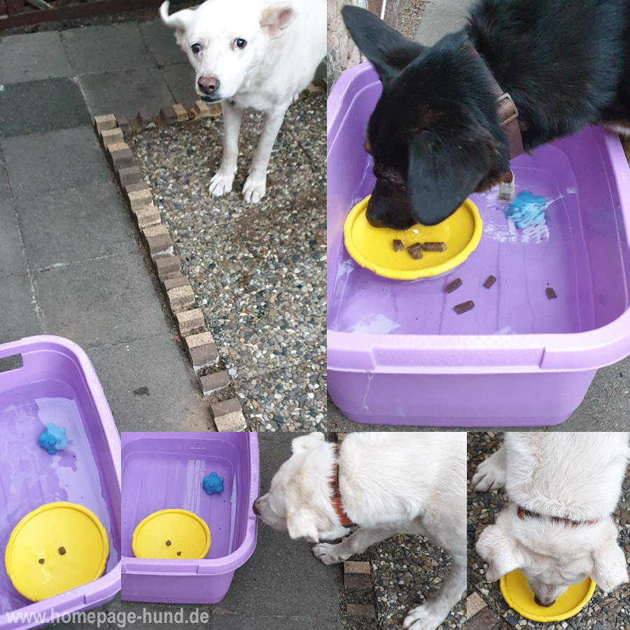 Wasserspiele Hund Hitzetipps