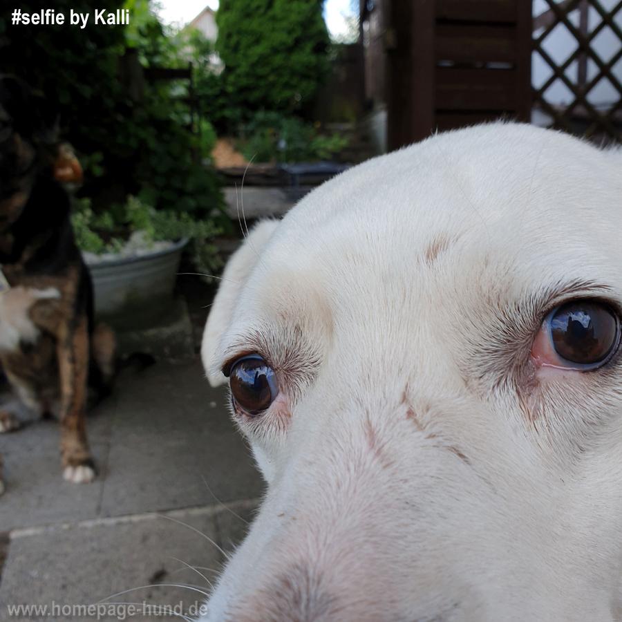 Hundeselfie by Kalli