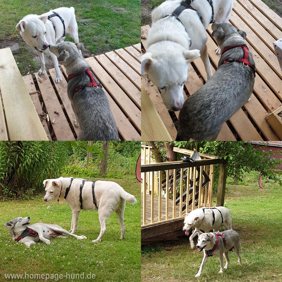 Hunde aus Rumänien - Tierschutz