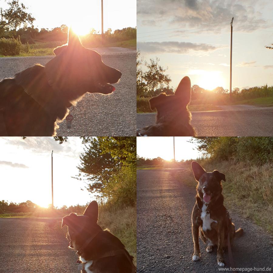 Abendgassi im Sonnenuntergang
