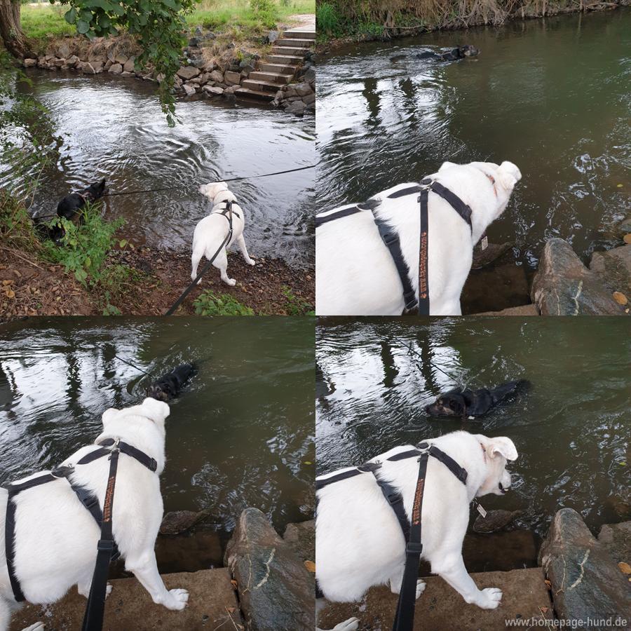 Hundeschwimmen Wohra