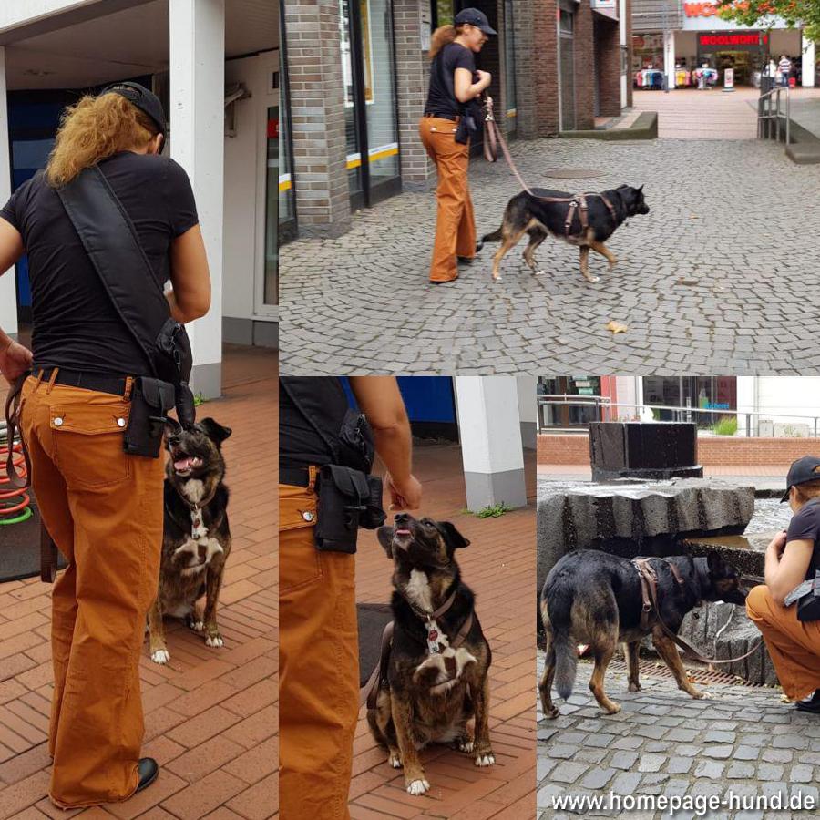 Social Walk 2019 Hundeschule Teamwork Stadtallendorf