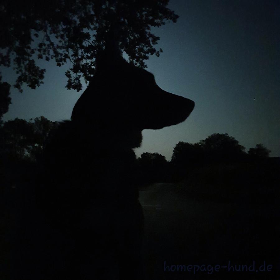 Dorchen im Dunkeln