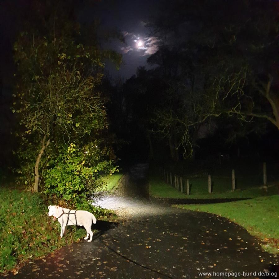 Herbstabend Gassi