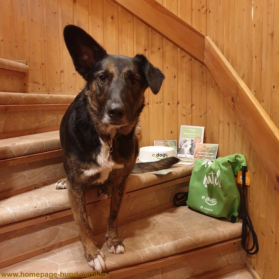 Hunde kaufen und Hunde verkaufen | Hundevermittlung edogs.de