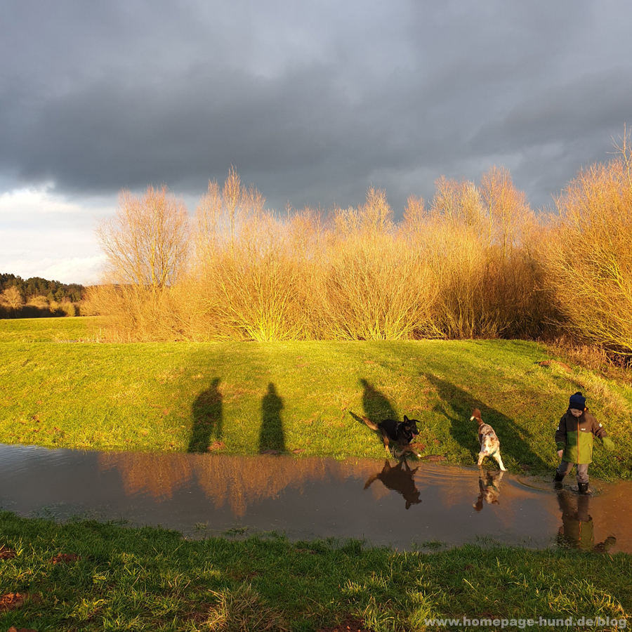 Hundespaziergang Wohra