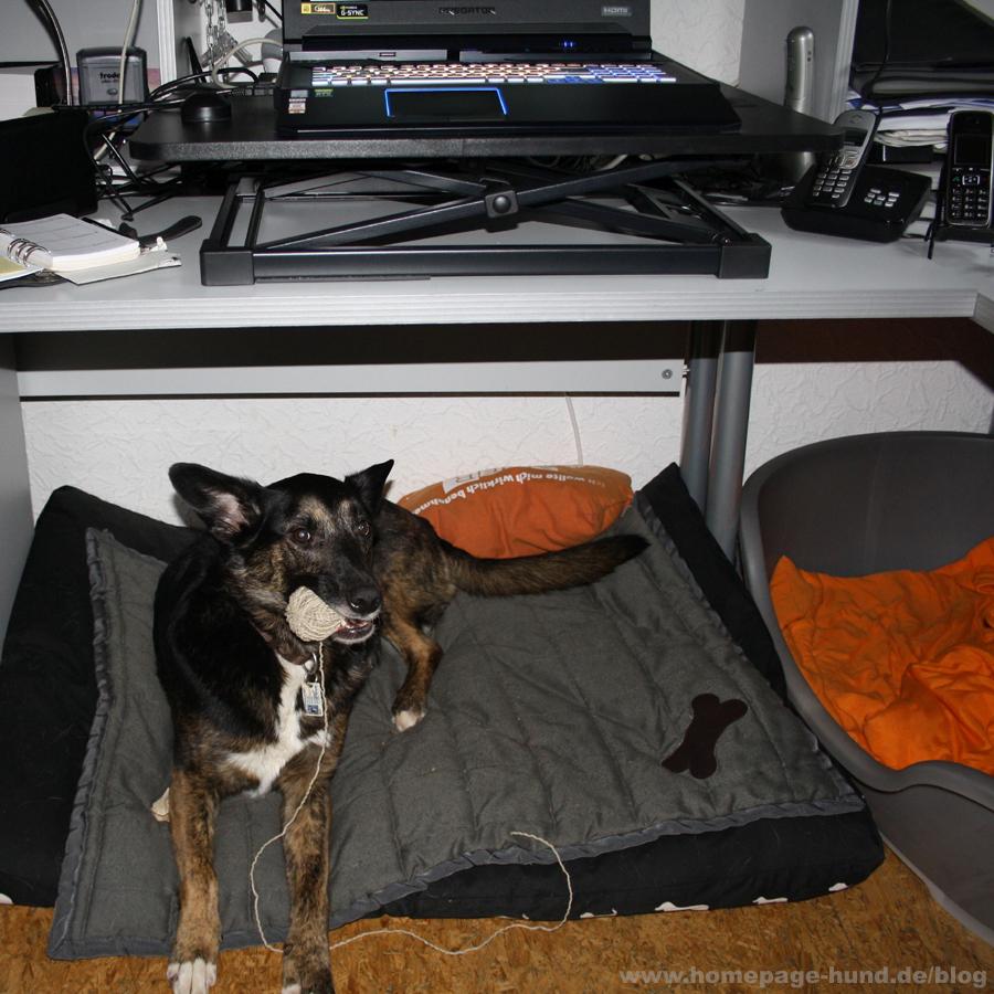 Praktikantin Dorchen bei der Arbeit. Bürohund Webagentur