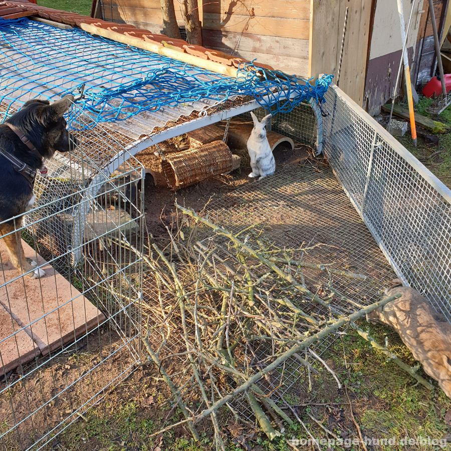 Kanichnchen und Hunde im Garten