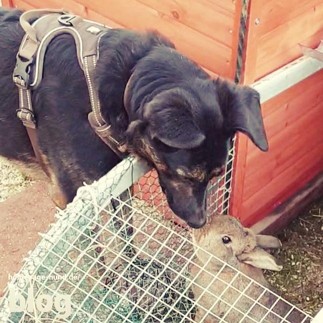 Hund und Kaninchen beste Freunde
