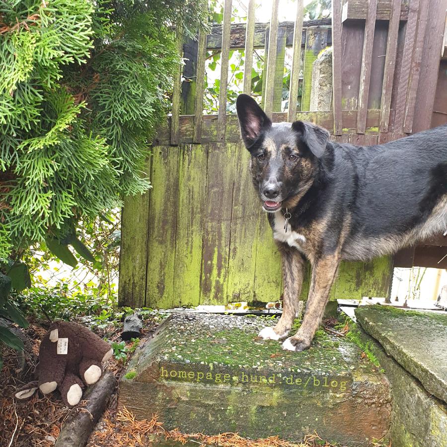 Dorchen und ihr Hundespielzeug