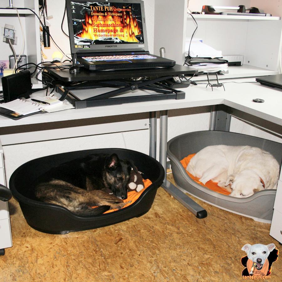 Bürohunde bei der Arbeit