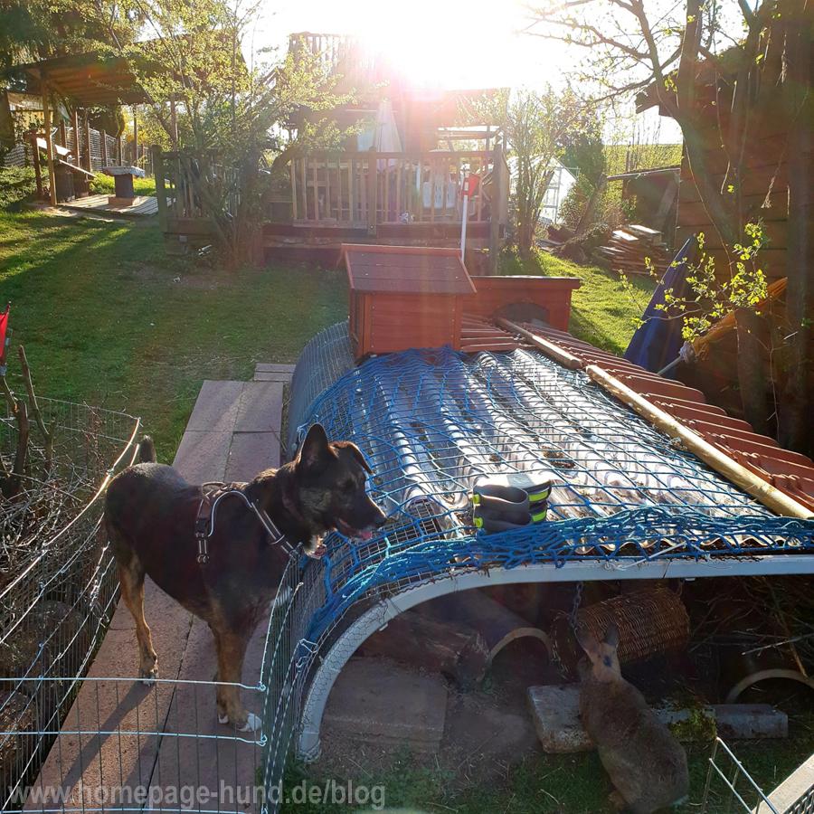 Hund Kaninchen Garten