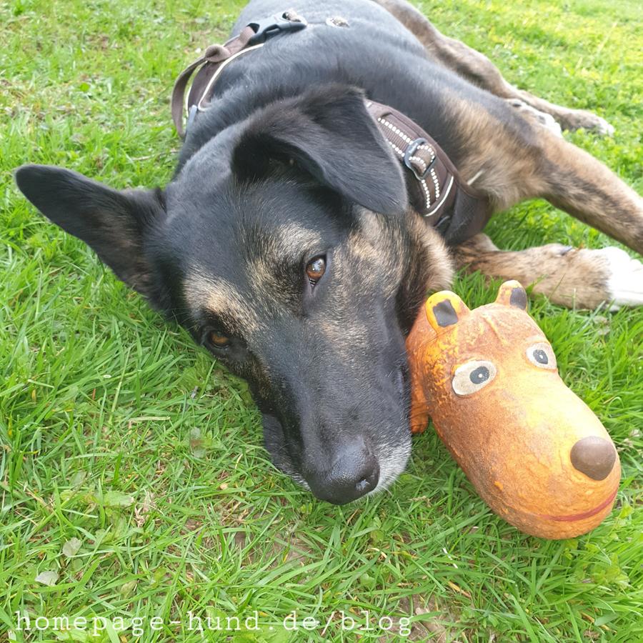 Dorchen Hund aus Portugal
