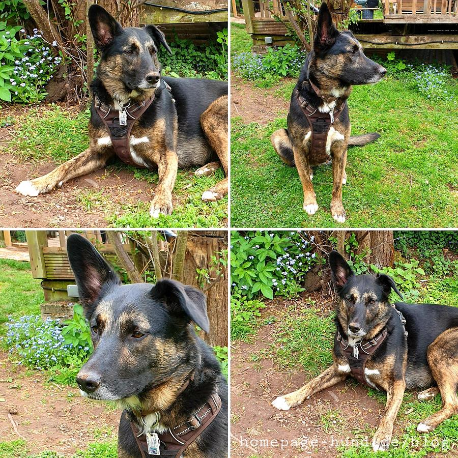 Hundemodel Dorchen im Garten